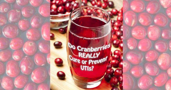 Cranberries For Uti Prevention Crimson Crusader Or Juicy Gossip Diagnosis Diet