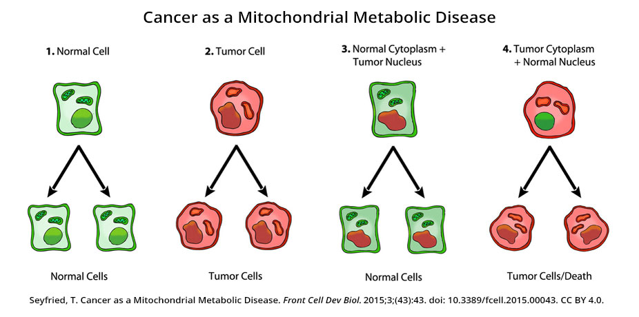 Seyfried's Cancer as a Metabolic Disease cancer nucleus experiment results