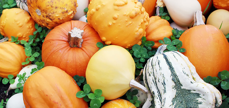 cancer-fighting pumpkins with vitamin a