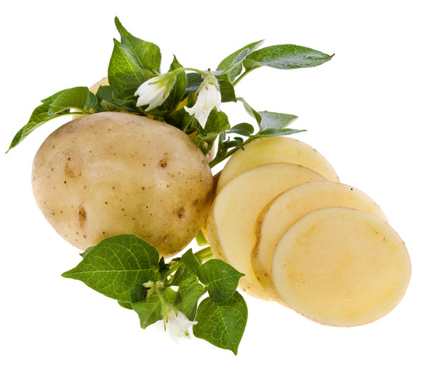 nightshade: potato